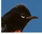 Redstart Systems Bird