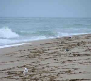 Siasconset Beach, Nantucket Island