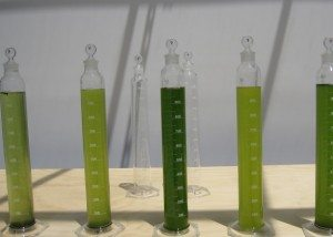 Algae Synthetic Genomics