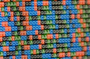 Unaligned DNA sequences