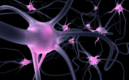 Neurons (stock photo)