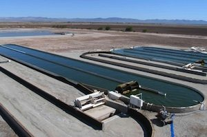 Algae ponds (credit Carbon Capture Corp)
