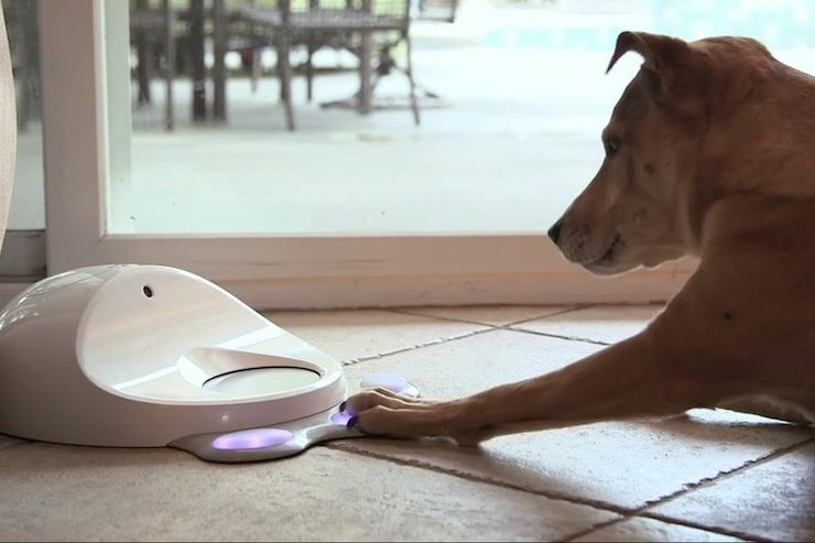 CleverPet Feeder is Like a Dance Dance Revolution for Dogs