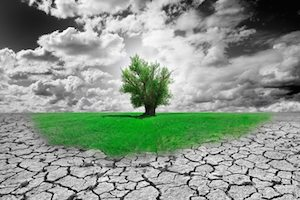 Drought with green tree DepositPhotos credit  Carlos Castilla