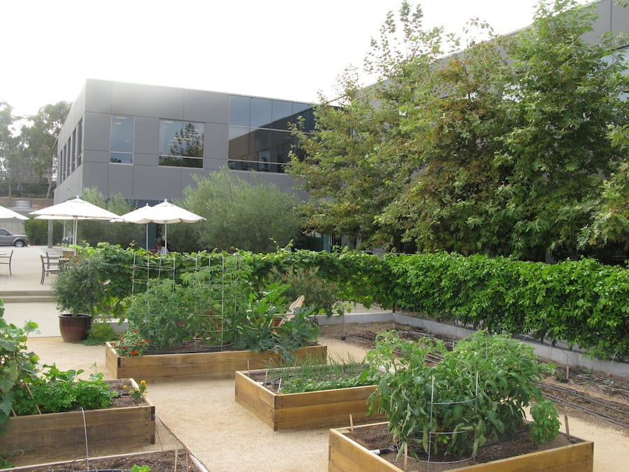 ...from garden to table at Green Acres restaurant