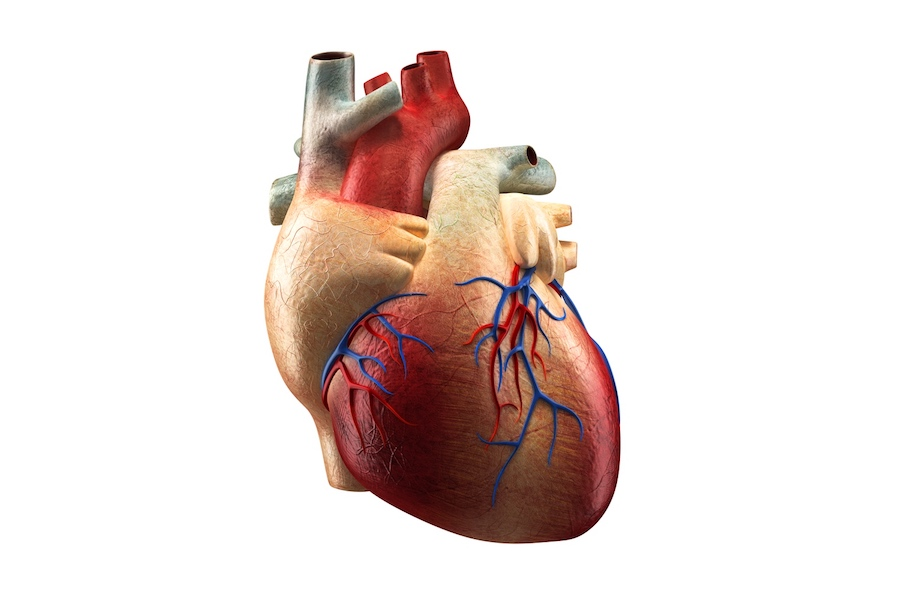 human heart image (Credit: Depositphotos_2015 by © decade3d)