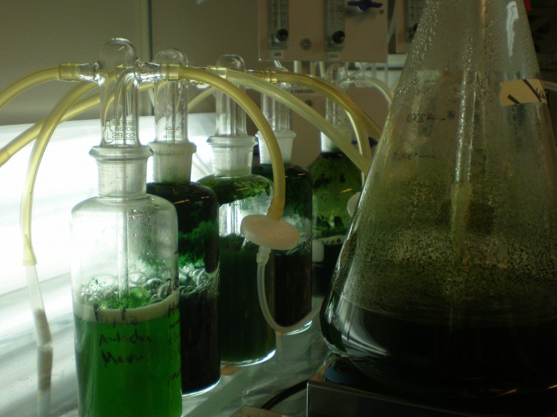 Phytonix Turns Photosynthetic Bacteria Into Tiny Chemical Factories