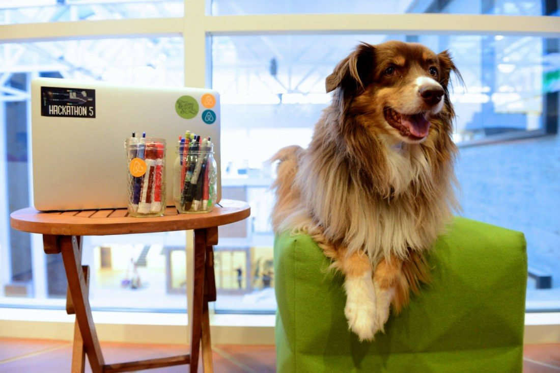 Tech Pup of the Day: Airbnb's Nutmeg