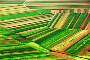Crops Agriculture Abstract Landscape (Credit-Depositphotos_rechitansorin)