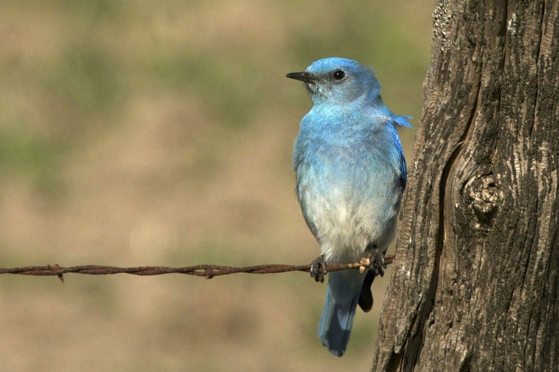 Bluebird Adds to CAR-T Arsenal With Five Prime Antibody Deal