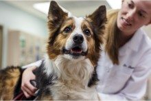 Zoetis Gets Conditional License for Antibody Treatment of Itchy Dogs