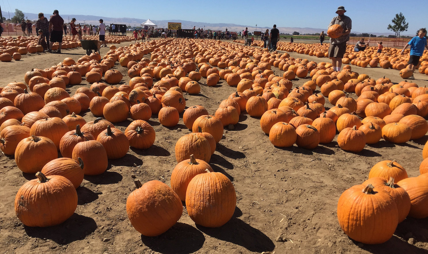 Pumpkin Farm in Mossdale, CA (Creative Commons photo by Ray Bouknight)