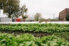 Urban Farm Incubator Aims to Grow Agricultural Movement in Indy