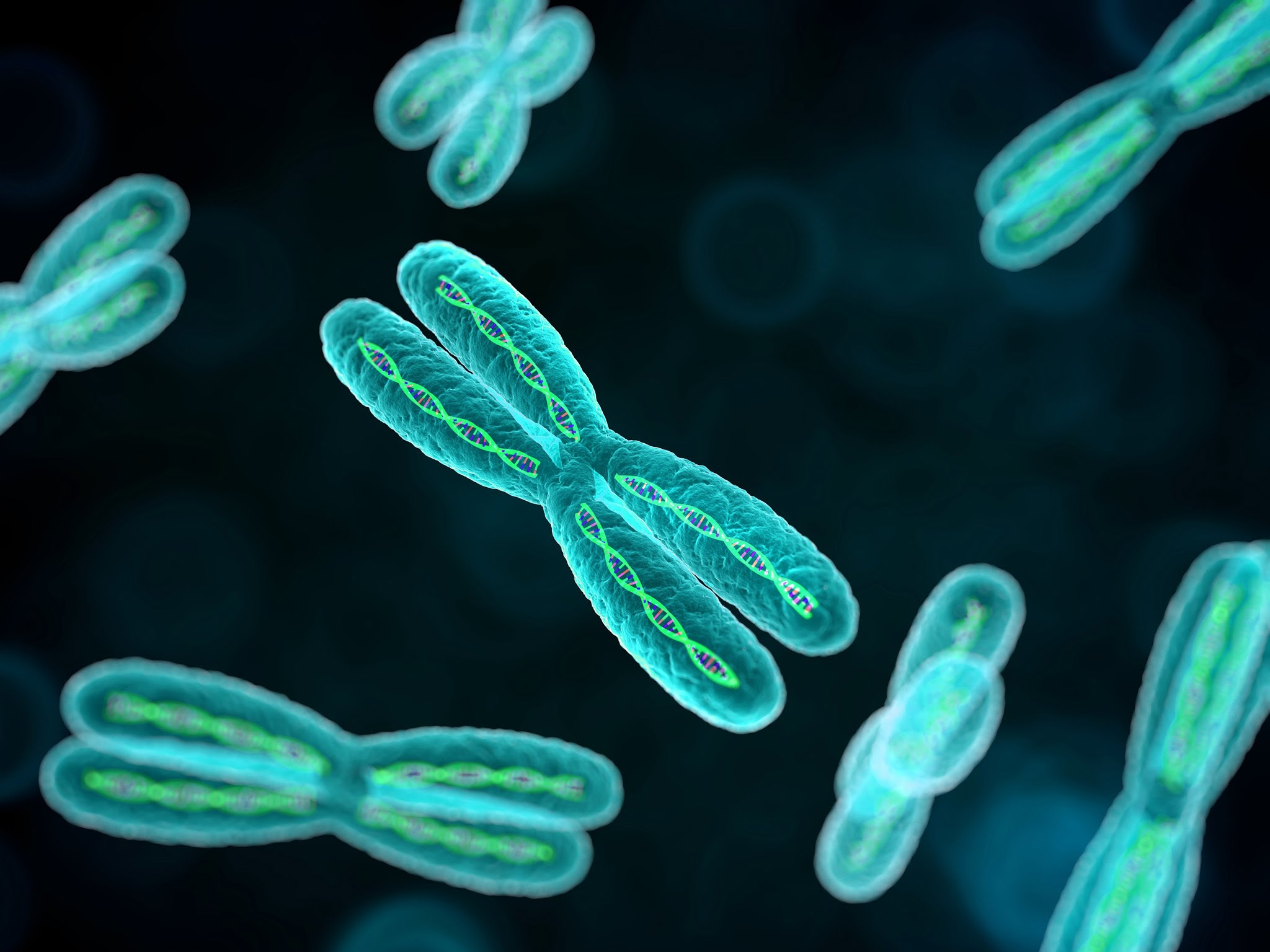 Chromosomes Stock Image