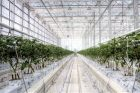 BrightFarms' Indoor Farming System Lands $30M to Grow