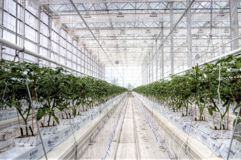 BrightFarms greenhouse