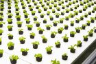 Bowery Bags $7.5M to Break Into Fast-Growing Indoor Farming Market
