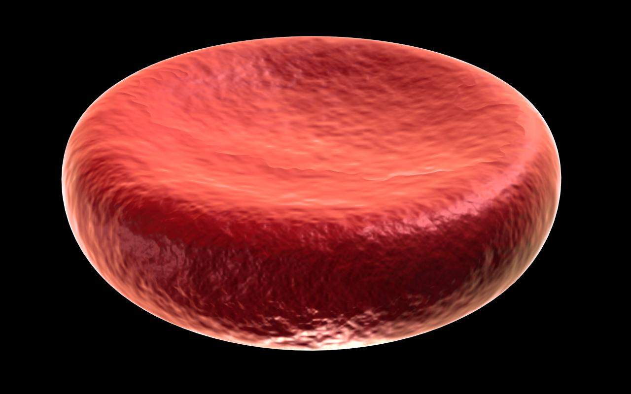 Erythrocyte, red blood cell