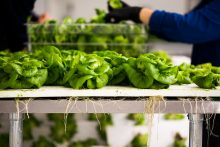 Farm Startup Bowery Lands $90M to Take Indoor-Grown Greens National
