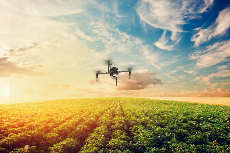 Potato crop field at sunset. Agriculture Drones (SlantRange photo used with permission)