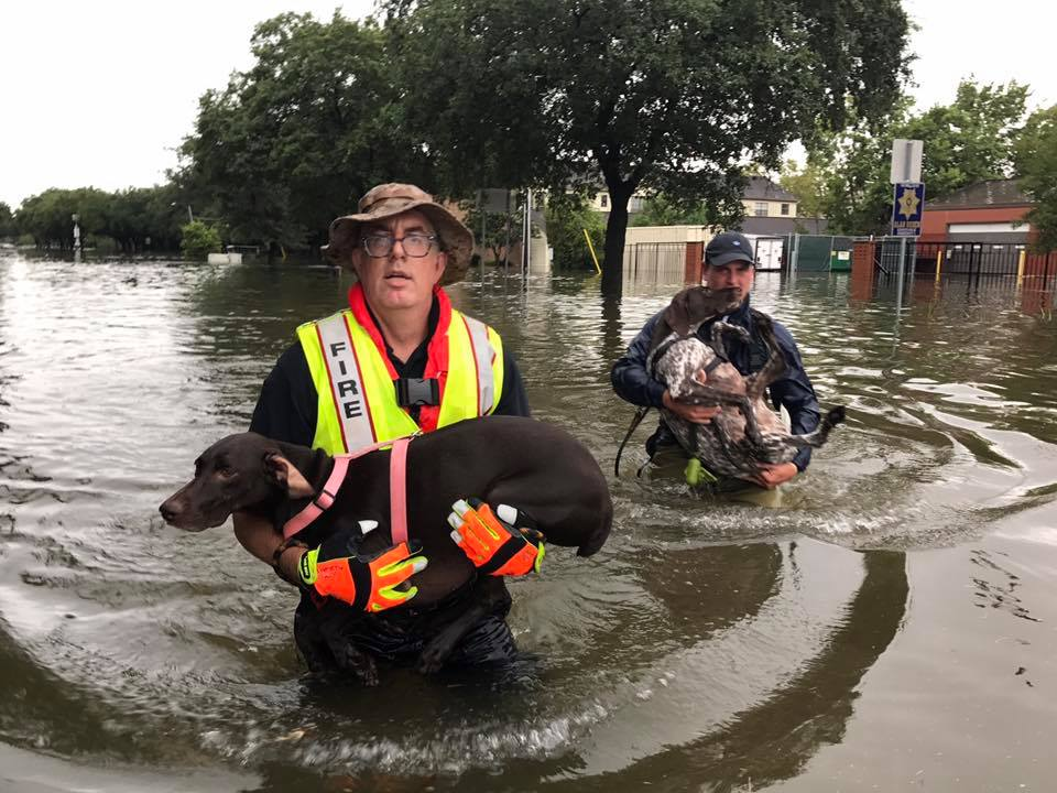 Canine rescue