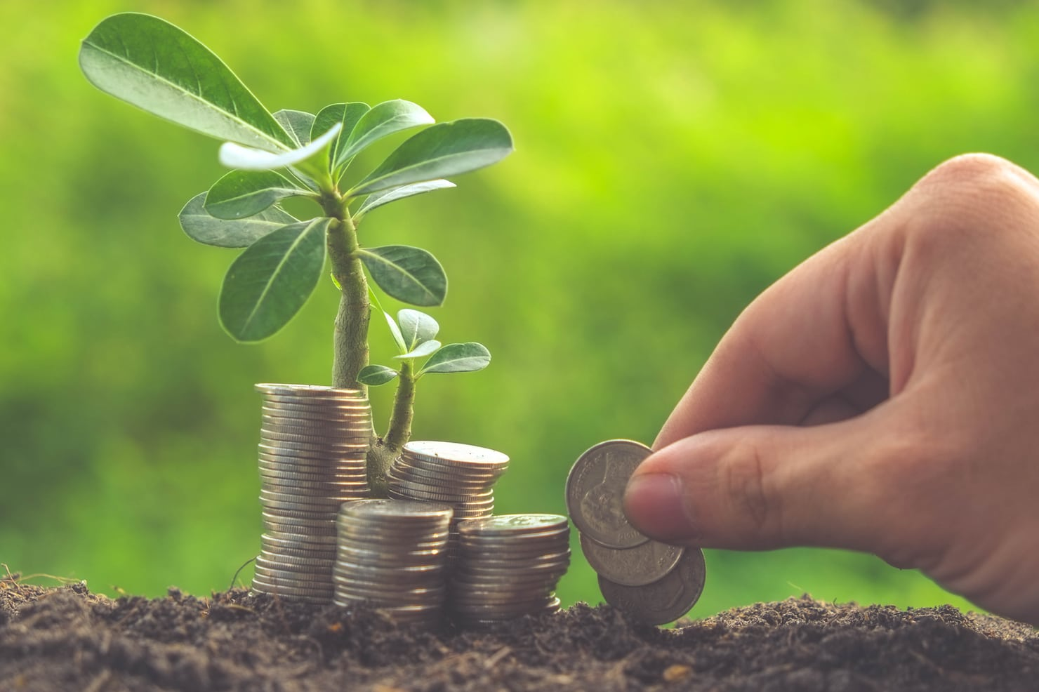 Stock image seed money invest VC