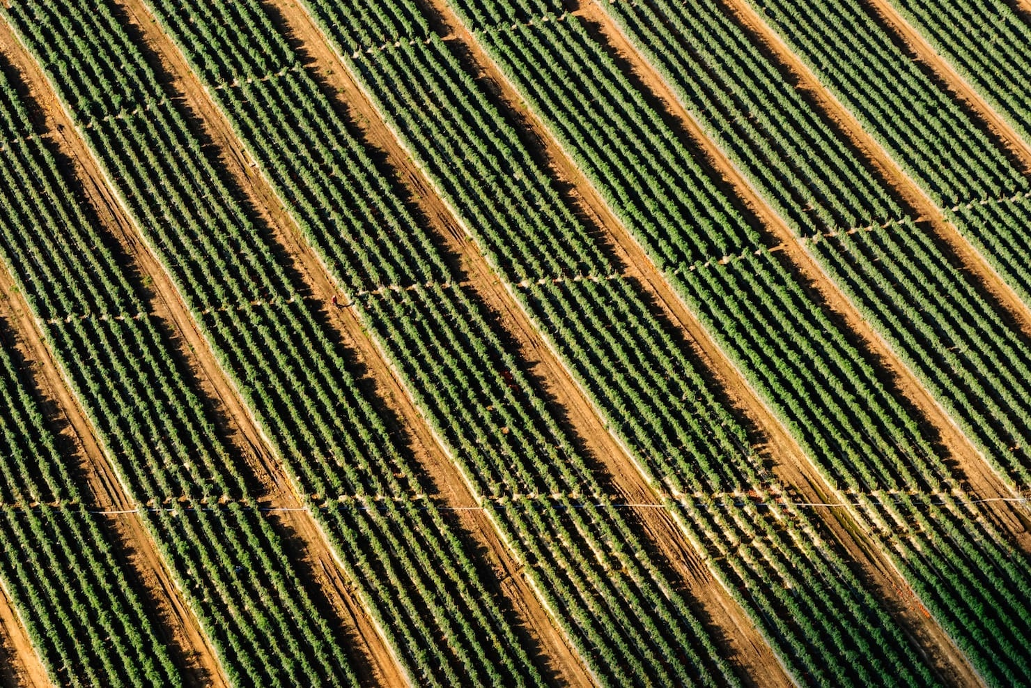 Precision Agriculture thumbnail