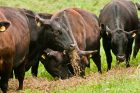 FDA Approves Elanco Cattle Drug, the First for Reducing Gas Emissions