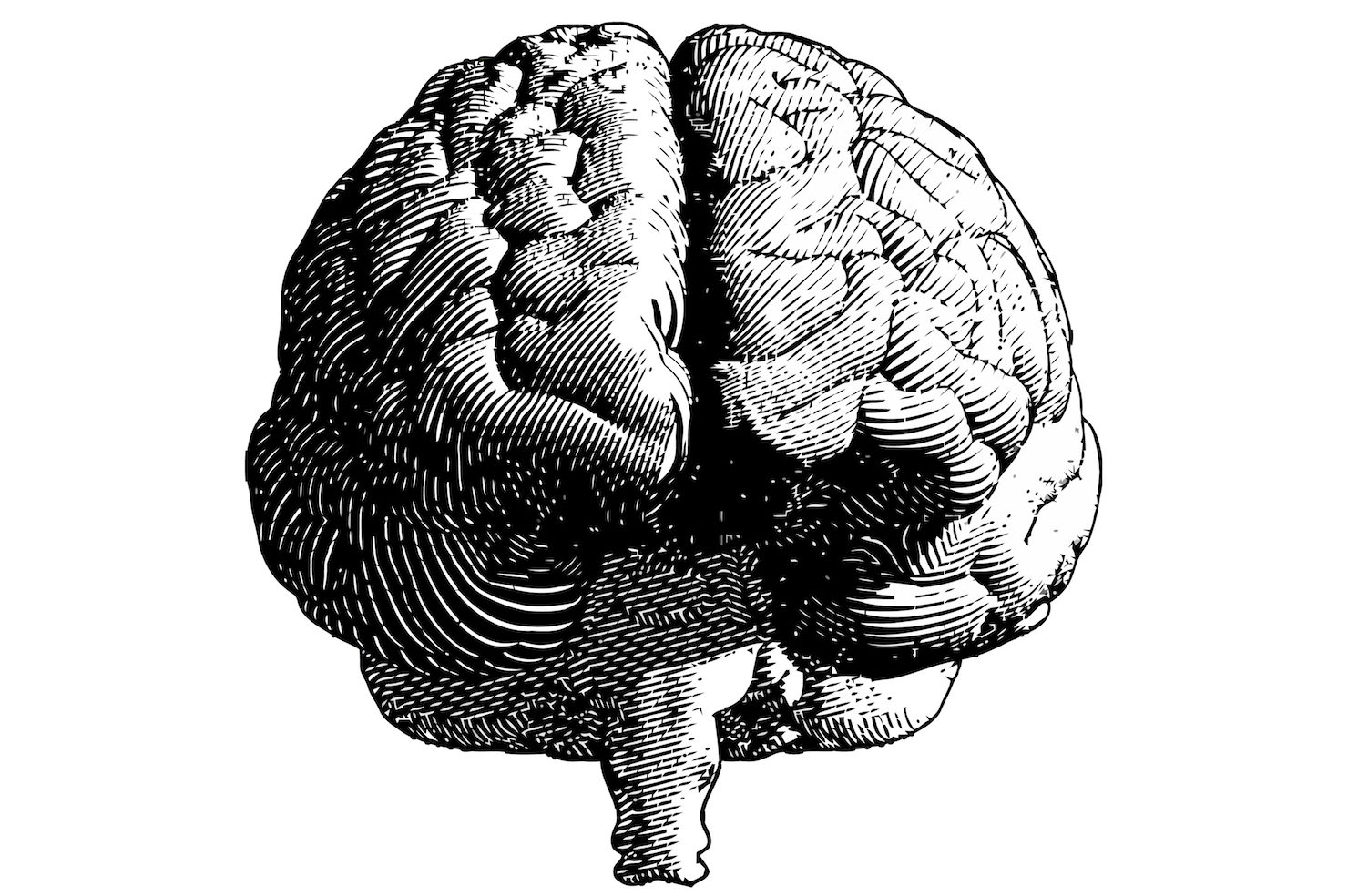 Monochrome engraving illustration of the front of the brain