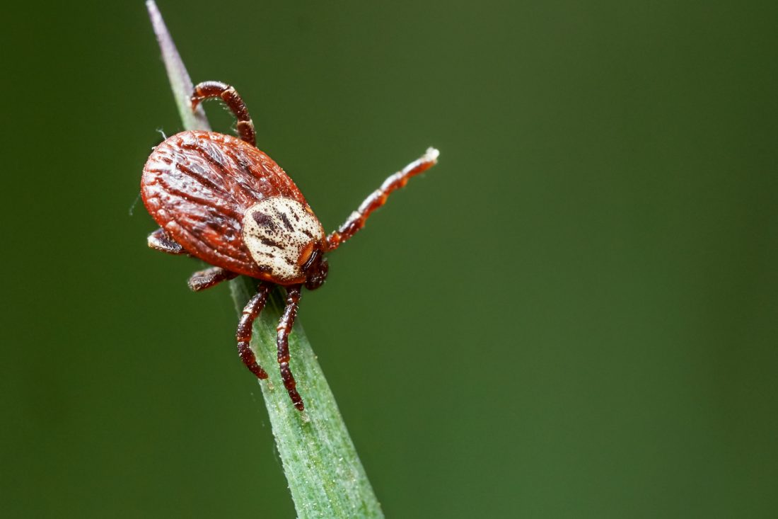 Pfizer Pays Valneva $130M for a Bite at a Lyme Disease Vaccine