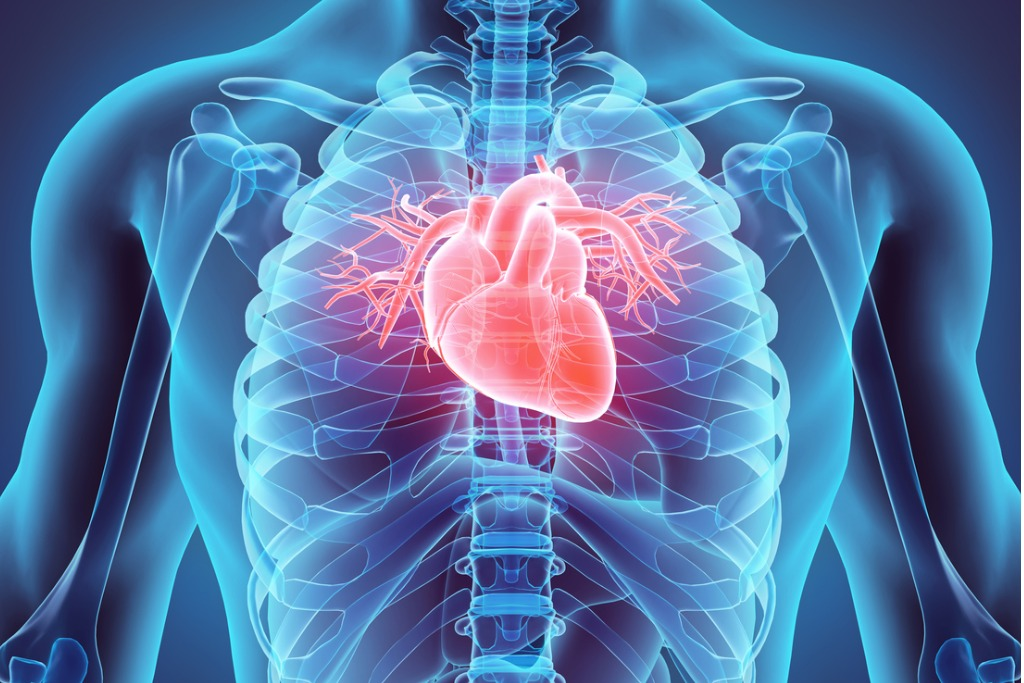 412098Bristol Myers to Buy MyoKardia, FDA-Ready Heart Disease Drug for $13.1B